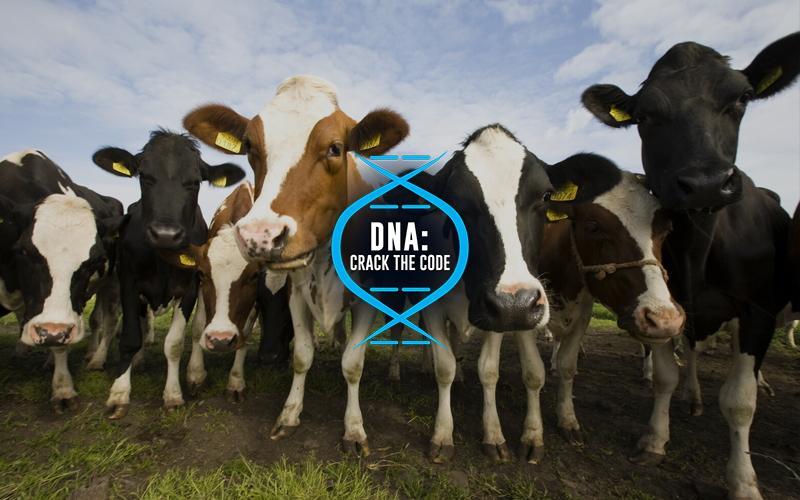 Genes & Inheritance - DNA Crack the Code Image