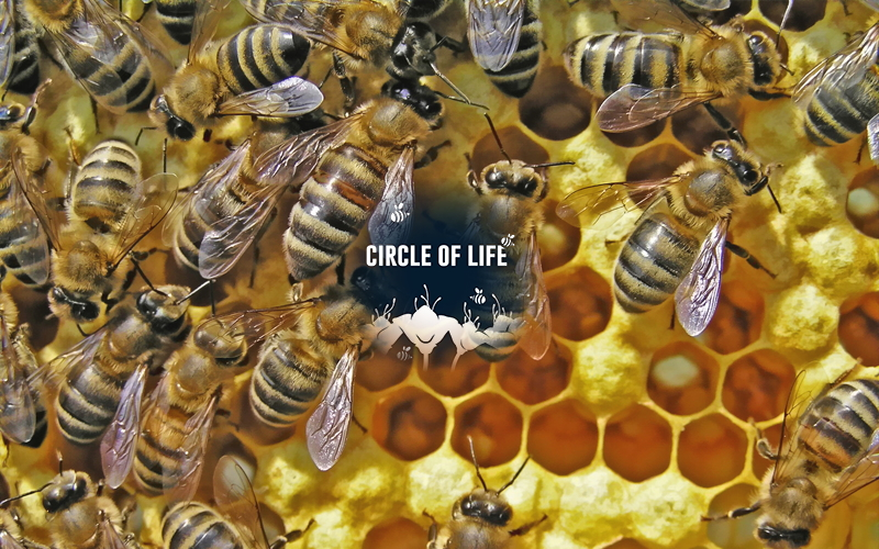 Reproduction of Organisms - Circle of Life Image